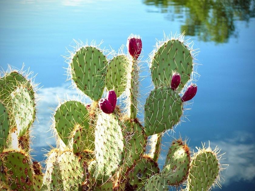 Una tecnología basada en los cactus podría revolucionar los coches eléctricos